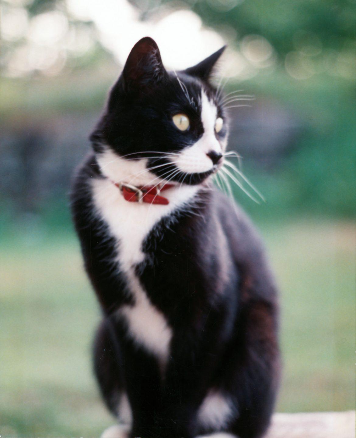 Juno - a companion animal